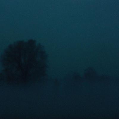 alberi_blu5