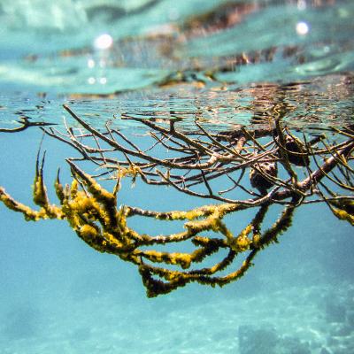 UnderwaterWorld_IsabellaSommati_06