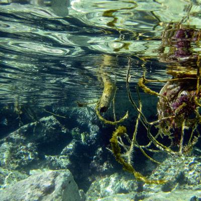 UnderwaterWorld_IsabellaSommati_08