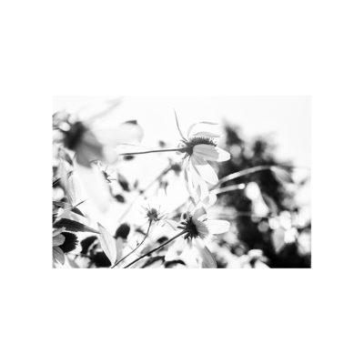 01_IMG_4939
