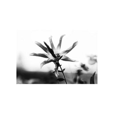 03_IMG_4912-Recuperato